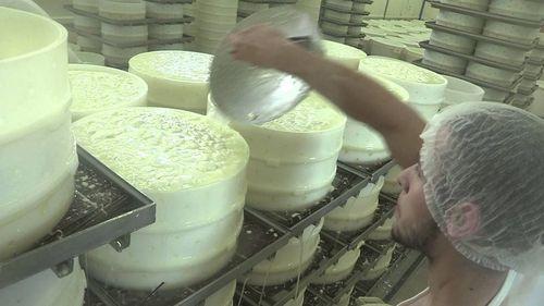 Brie ferme